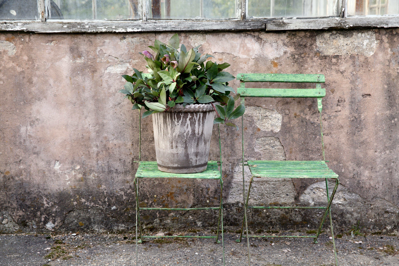 Bergs_Emilia_graa_krukke_plante_single_groen_stol