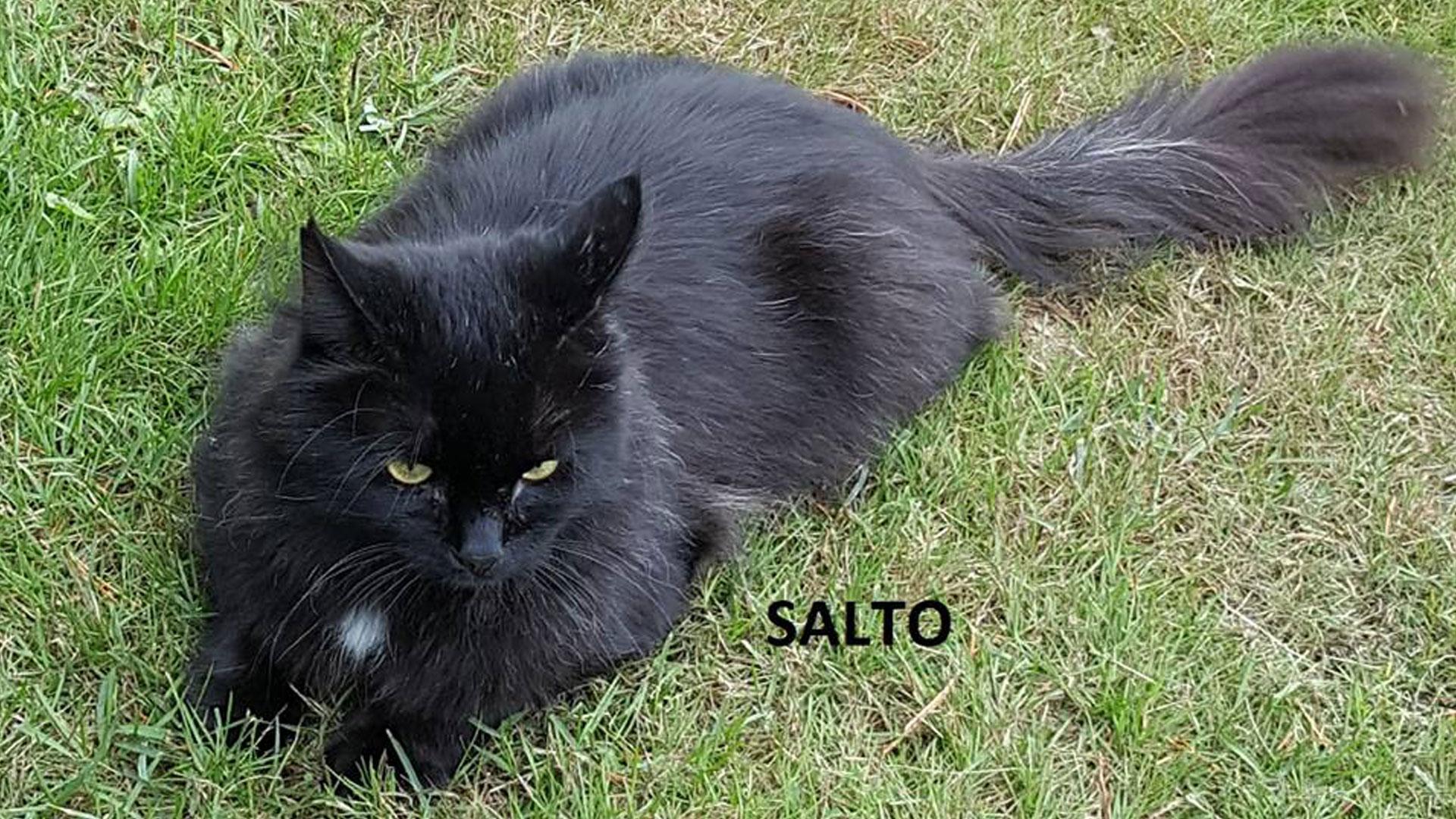 Salto_1920
