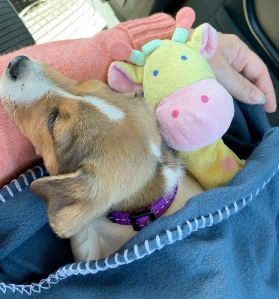 sover i bil